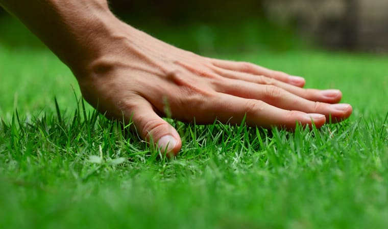 A clever guide to thick lawns